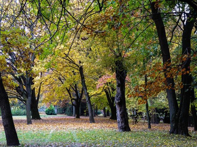 budapest park alise brio